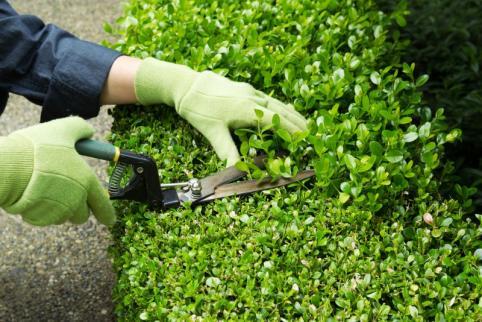 entretien espaces verts